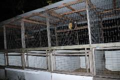 Rooster cages in Mulberry